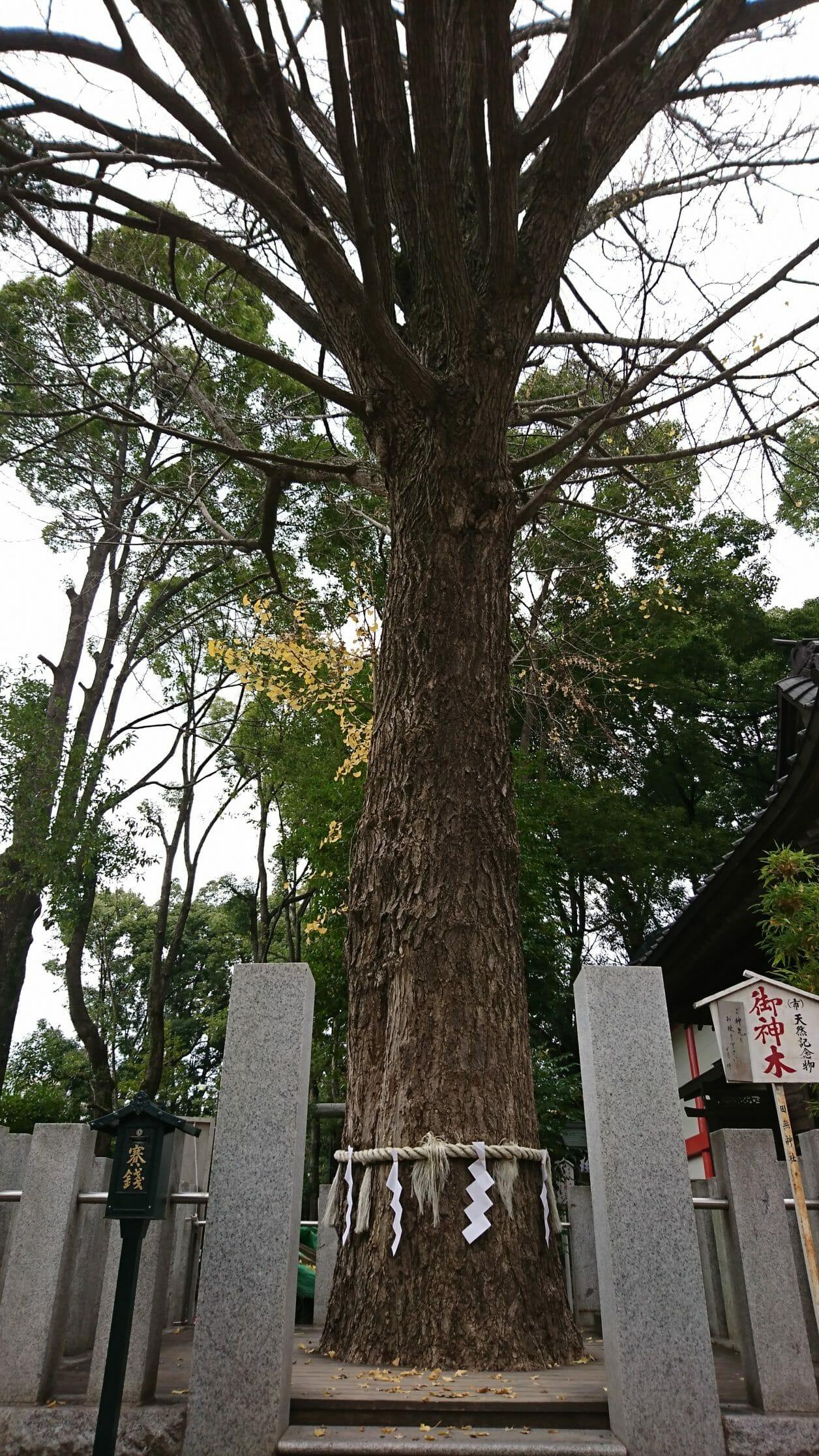 田無神社のご神木