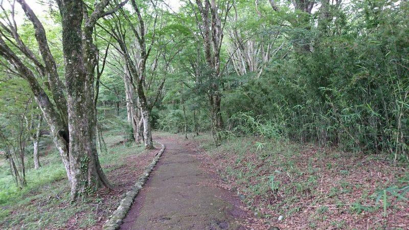 白龍神社と九頭龍神社を結ぶ芦ノ湖沿いの小径