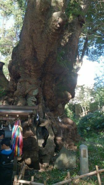 静岡の復縁のパワースポット来宮神社