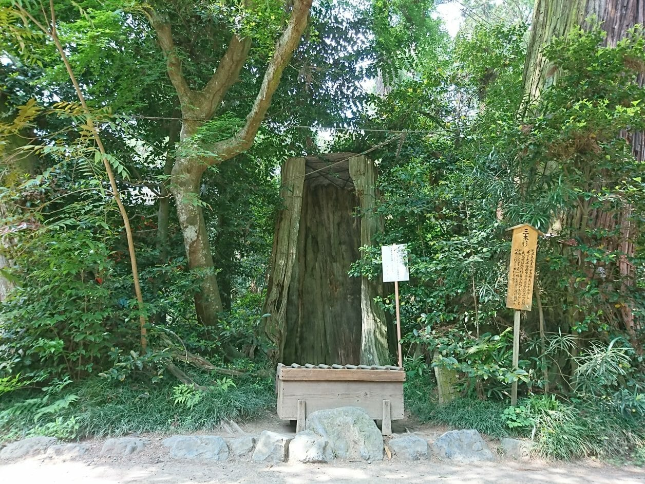 香取神宮の三本杉