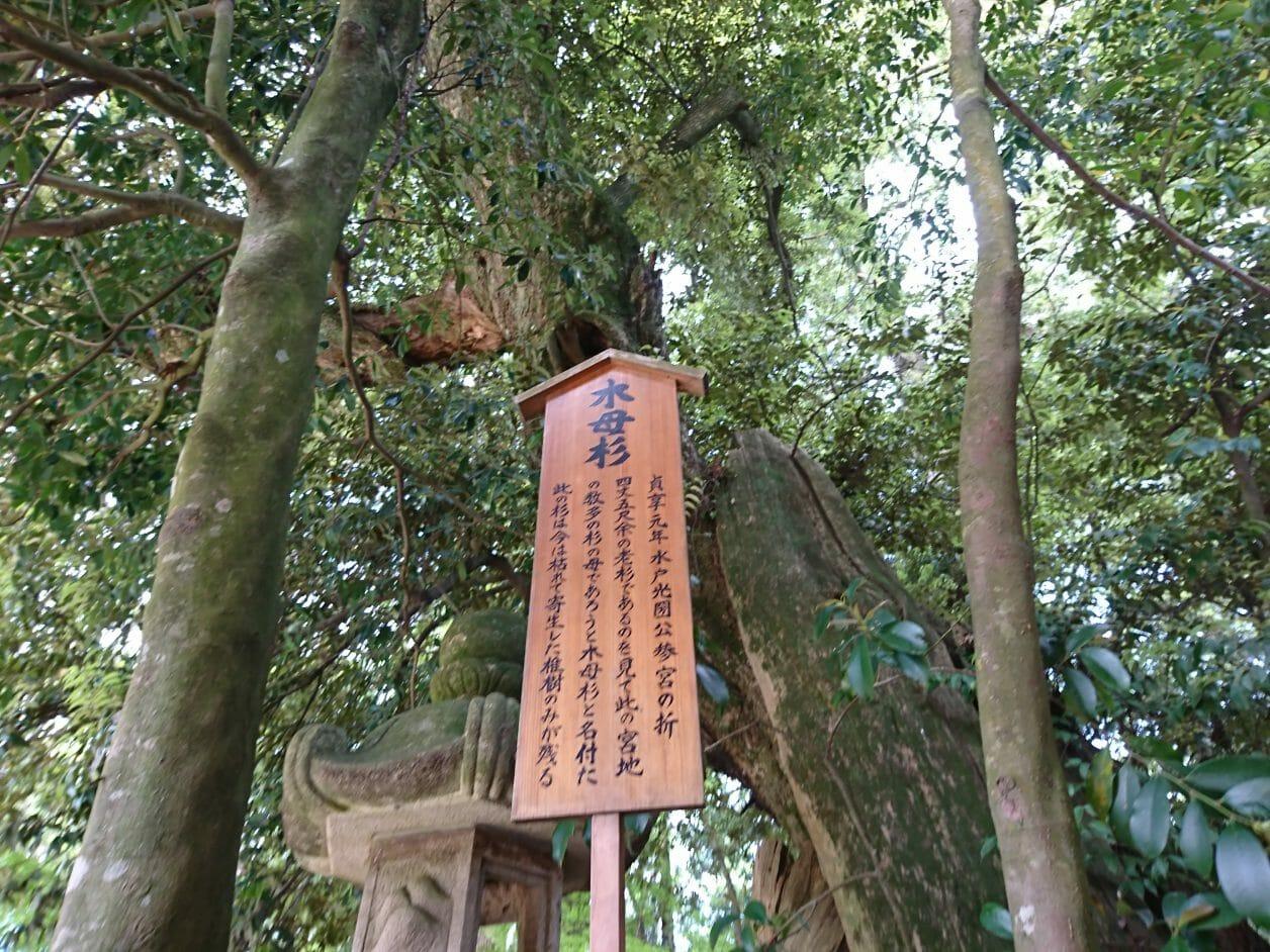 香取神宮の木母杉跡