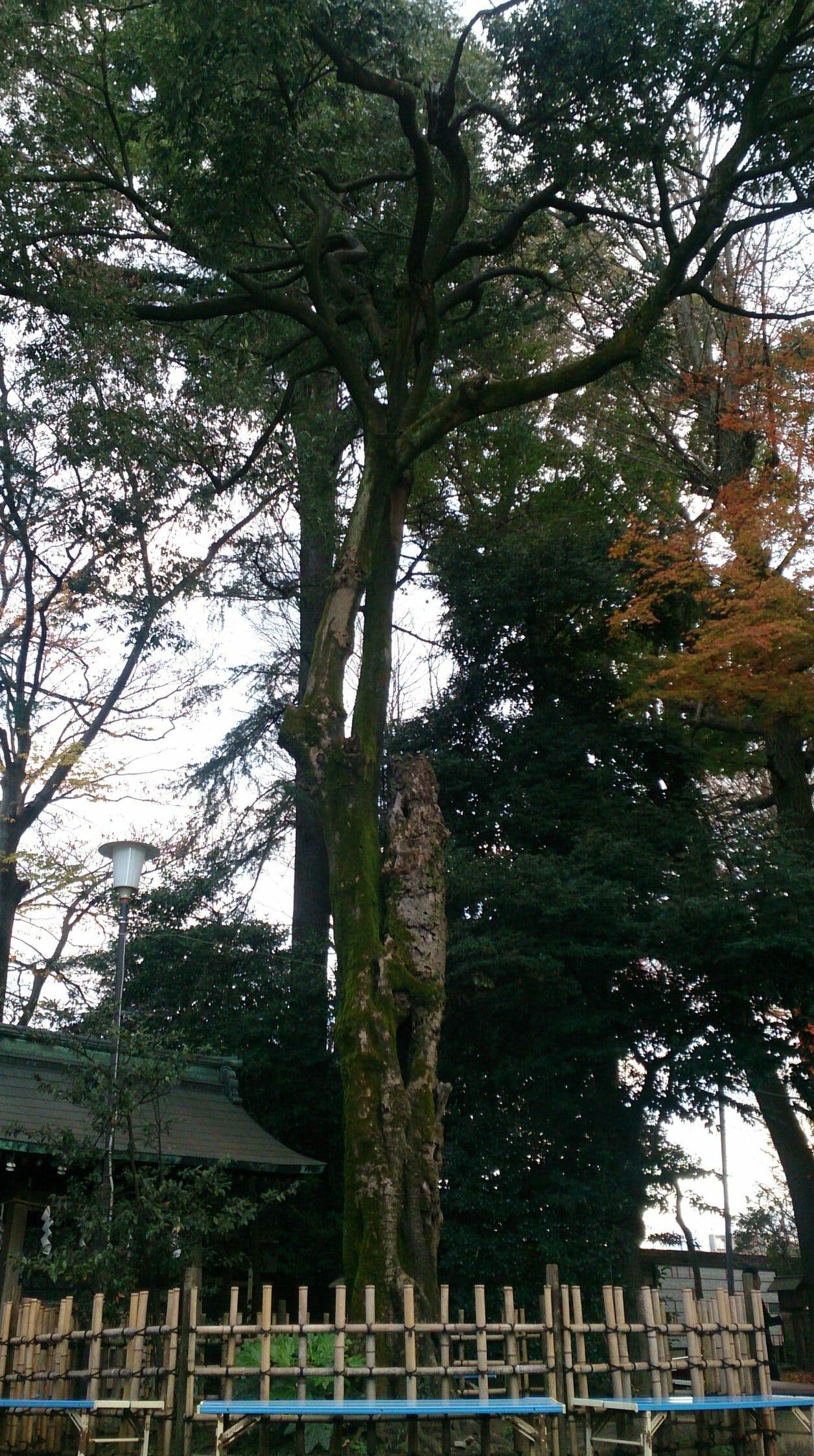 パワースポット代々木八幡宮の境内