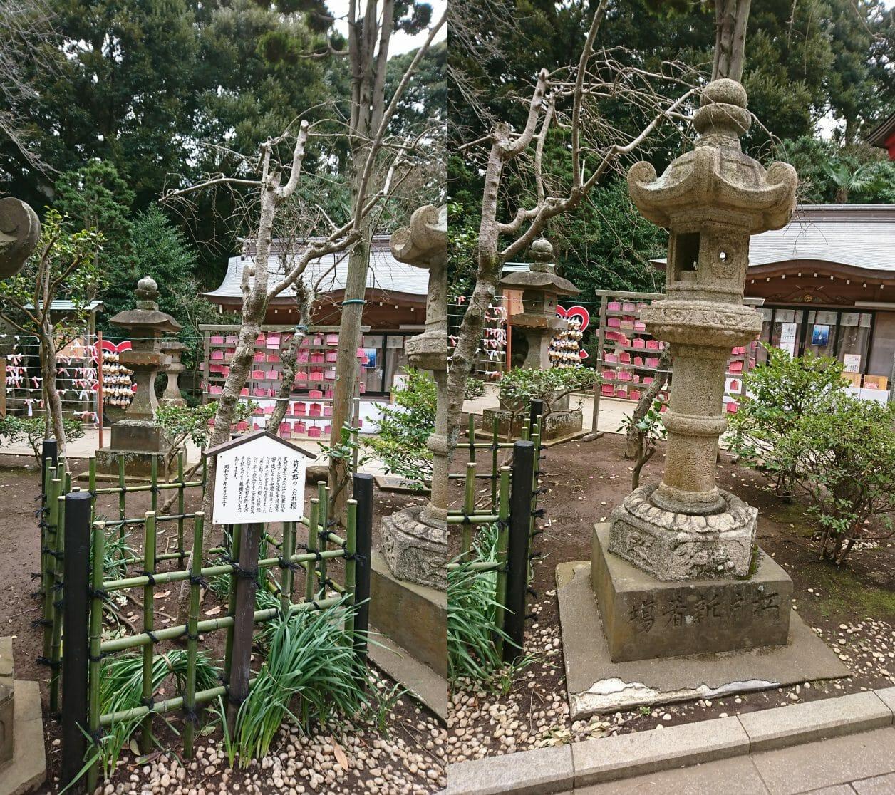 江ノ島神社中津宮にある石燈篭としだれ梅