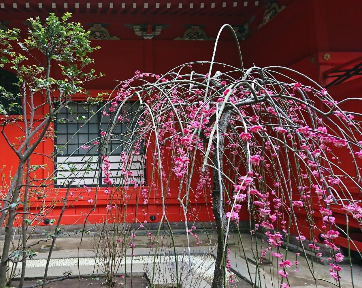 江ノ島神社の中津宮の水琴窟