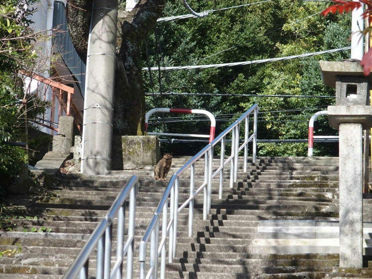 伊豆山神社参道の階段