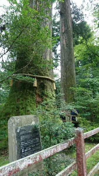 箱根神社のパワースポット矢立の杉