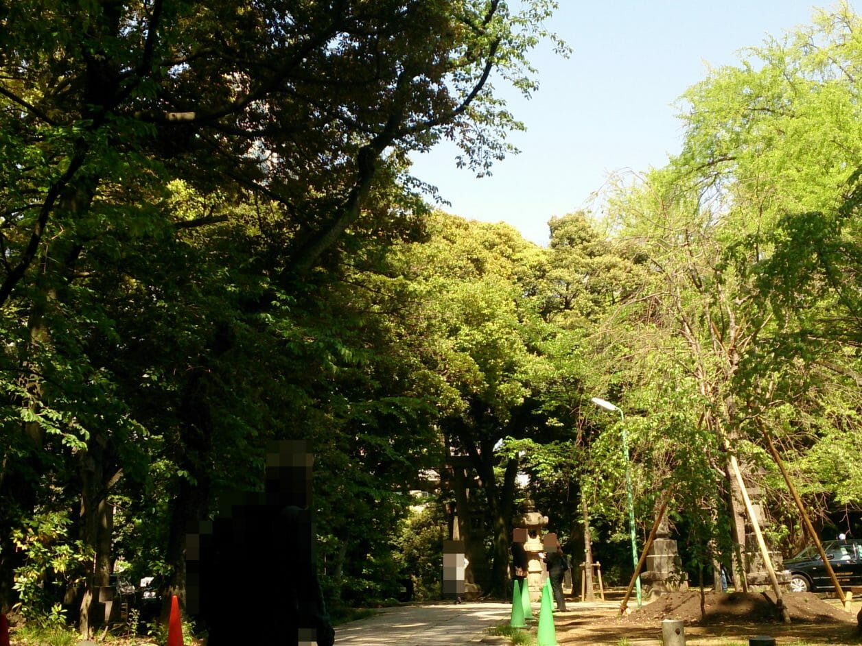 赤坂氷川神社のご神木