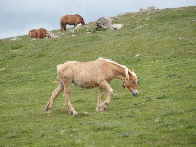 巡礼の道ピレネー越えで出会った動物たち
