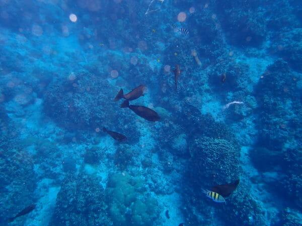 グアムの海でシュノーケリング
