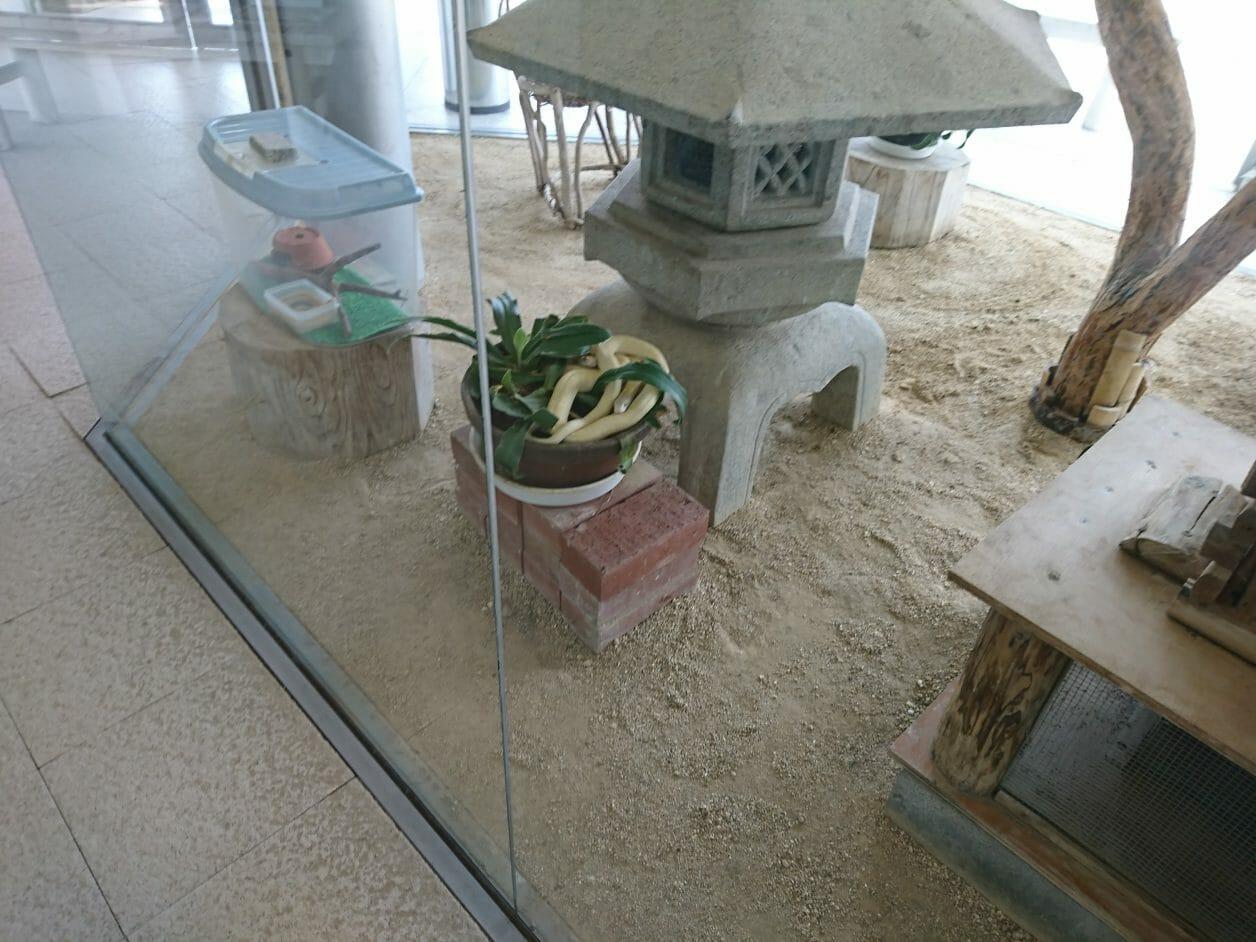 岩国の白蛇神社