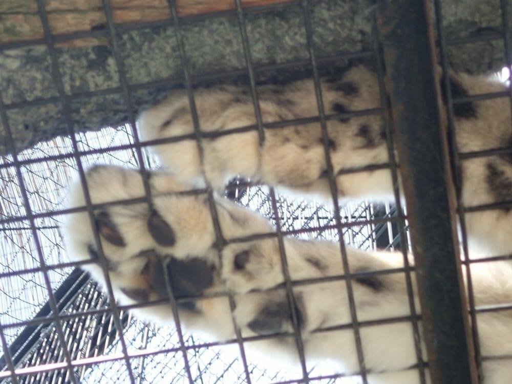 旭山動物園のもうじゅう館