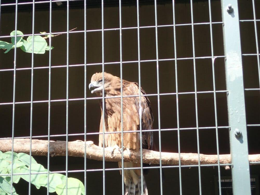 円山動物園のフクロウとタカの森