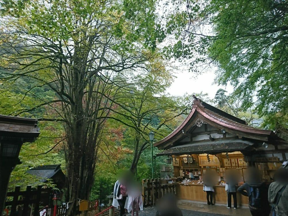 貴船神社本宮の御神木・桂の木