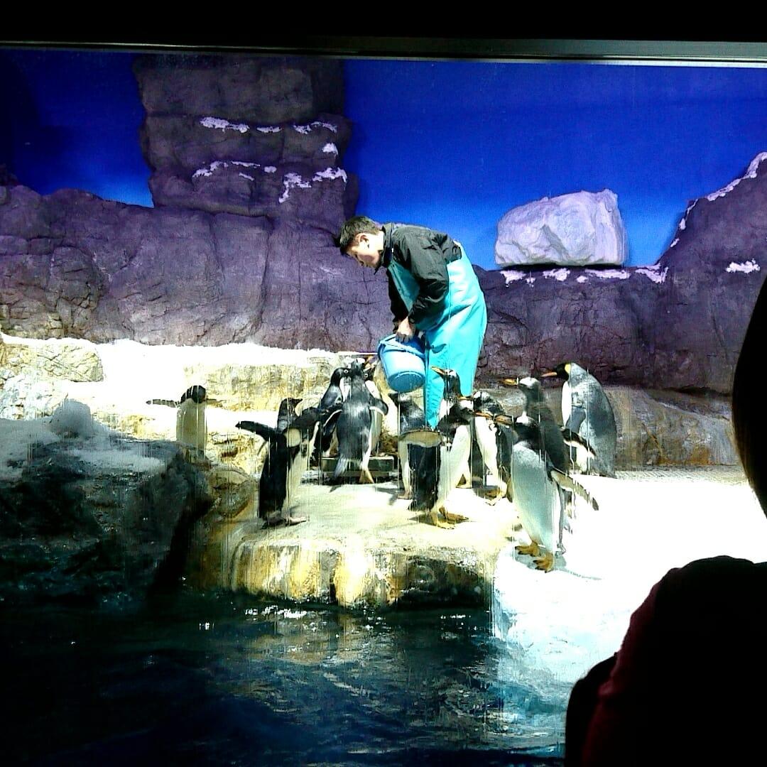 海遊館のペンギンたち
