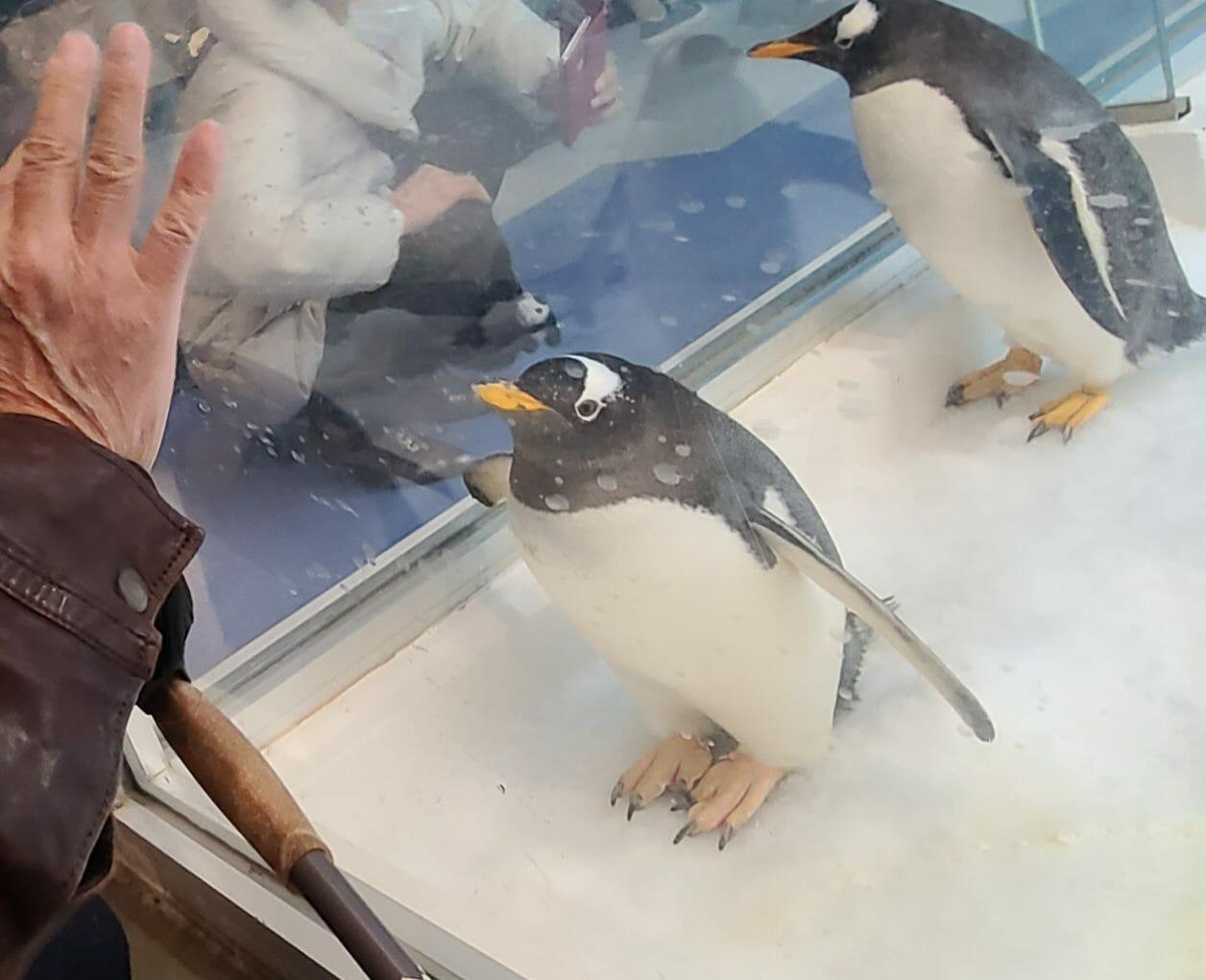 南紀白浜アドベンチャーワールドのペンギン